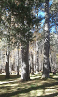 Arbortum