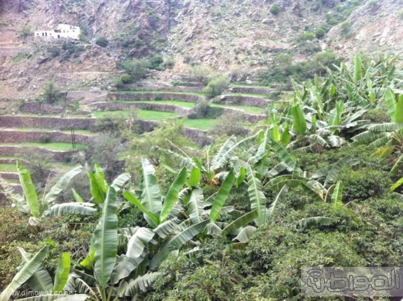 وادي الغيل