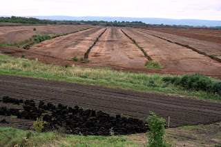 Bogs are a source of peat fuel in Ireland, but can also preserve bodies for millennia due to low levels of oxygen and high levels of acid