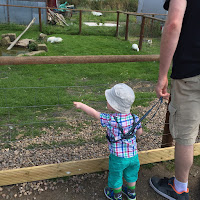 Little boy pointing at animals