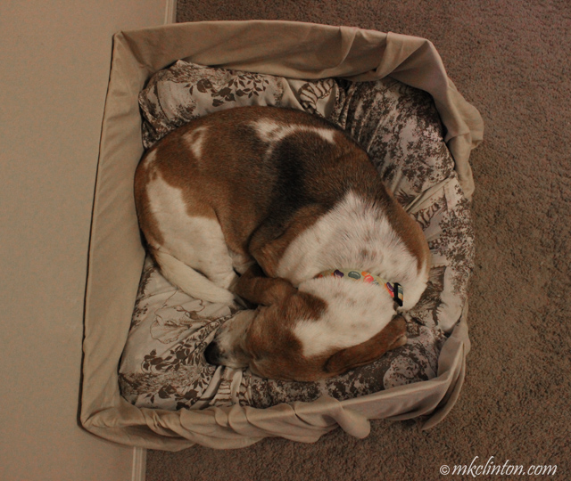 dog sleeping in box