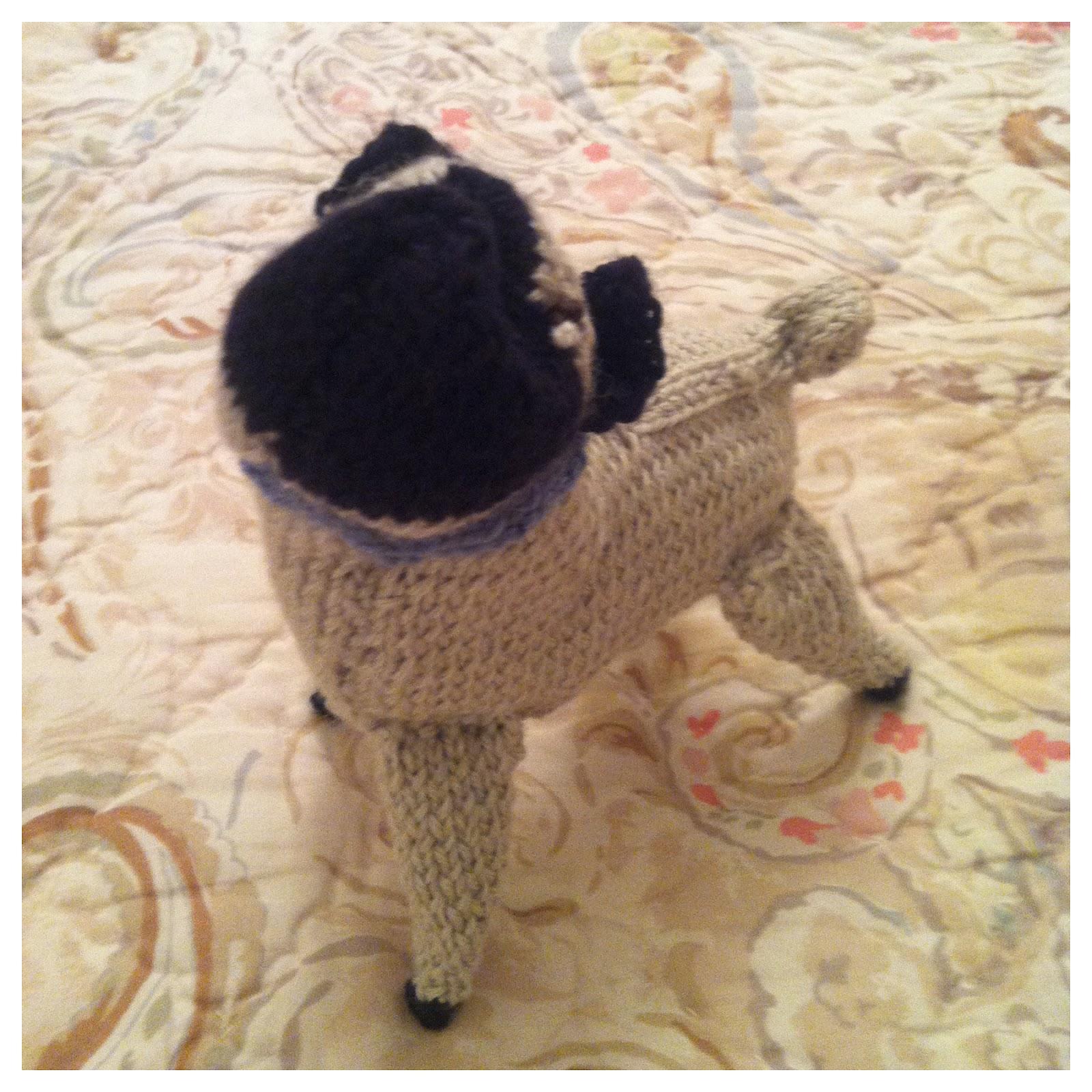 anna knits, etc.: anna knits - knit pug update 3