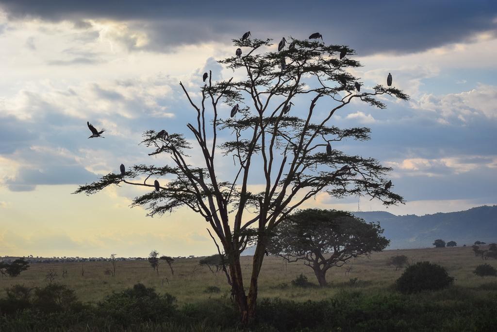 african safari checklist