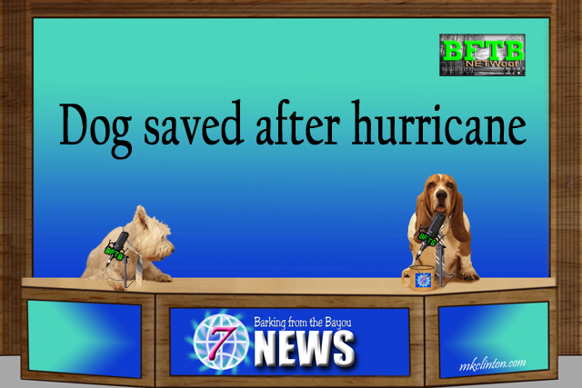 BFTB NETWoof News with dog co-anchors