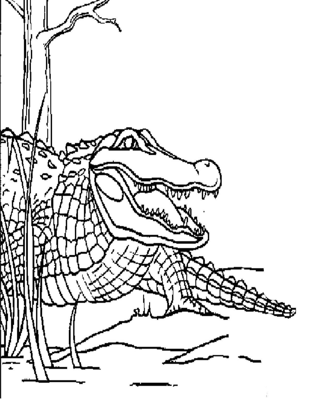alligator coloring pages printable coloring pages of butterfly