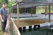 Sosok Guru Pesantren As'ad Jambi Rintis Usaha Jual Benih Ikan Gurame Soang
