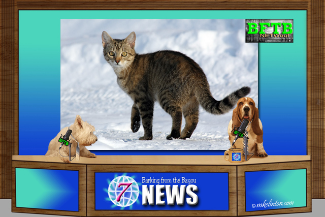 BFTB NETWoof News report on cat's paws becoming stuck in frozen snow