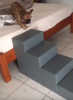escadinha para cachorro buldog