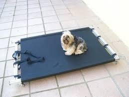 maca de permanência para cães
