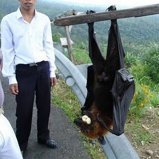 Be.Our.Story: Giant Size Bat!