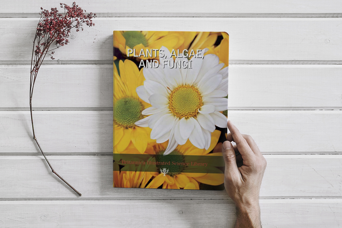 Book PLANTS, ALGAE, AND FUNGI (PDF)