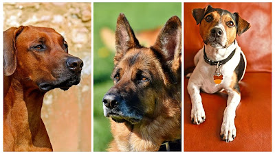 Types of Dogs: The Three Most Popular