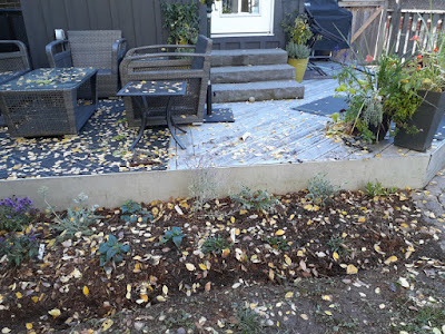 Dufferin Grove Toronto new garden renovation after by Paul Jung Gardening Services--a Toronto Gardener for Hire
