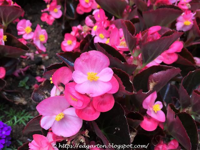 Sommerblüten rosa