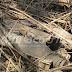 கேப்பபிளவில் மக்கள் கண்ணில் வெடிக்காத நிலையில் வெடி பொருட்கள்! வைத்தது சிங்கள ஆமி தானோ ?