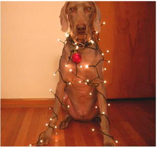 photo drôle de noel d'un chien
