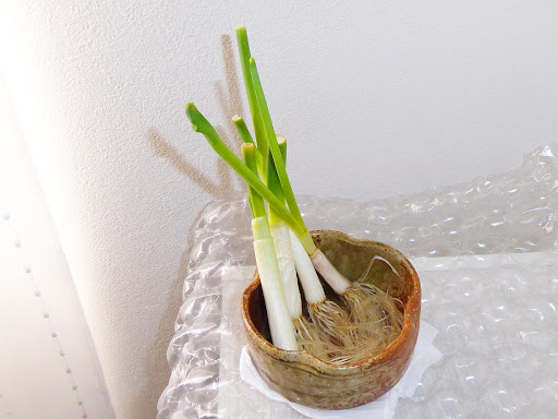 ねぎの再生栽培