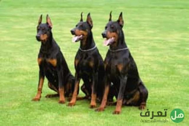 هل تعرف, أشرس أنواع الكلاب في العالم؟