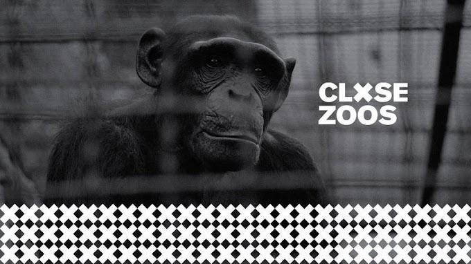 CLOSE ZOOS - La campaña que invita a firmar en Change para que cierren los zoológicos