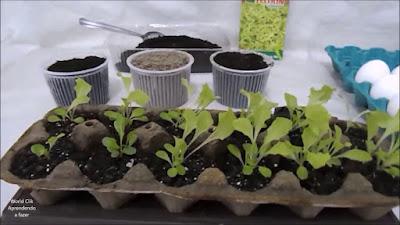 Como fazer sementeira com caixa de ovos