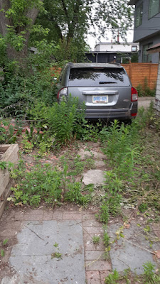 East York Toronto Backyard Summer Garden Cleanup Before by Paul Jung Gardening Services--a Toronto Small Gardening Company