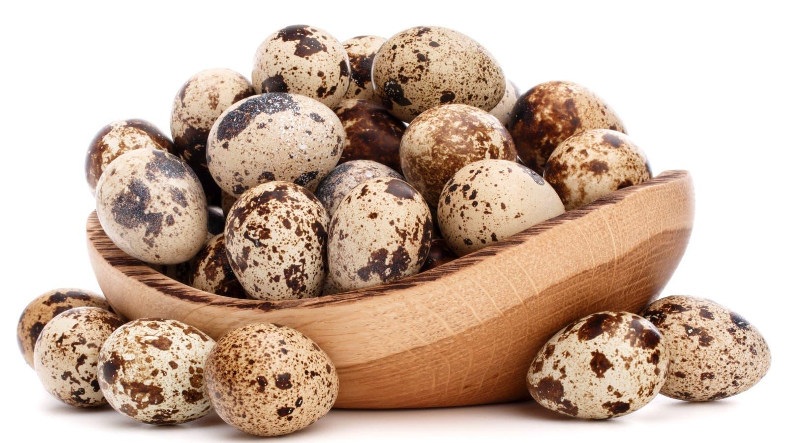ماهو بيض السمان وماهي فوائده لجسم الأنسان