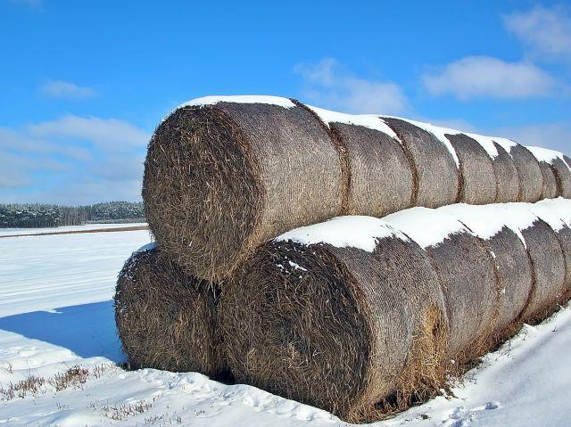zimowa sceneria, bale słomy, śnieg, mróz