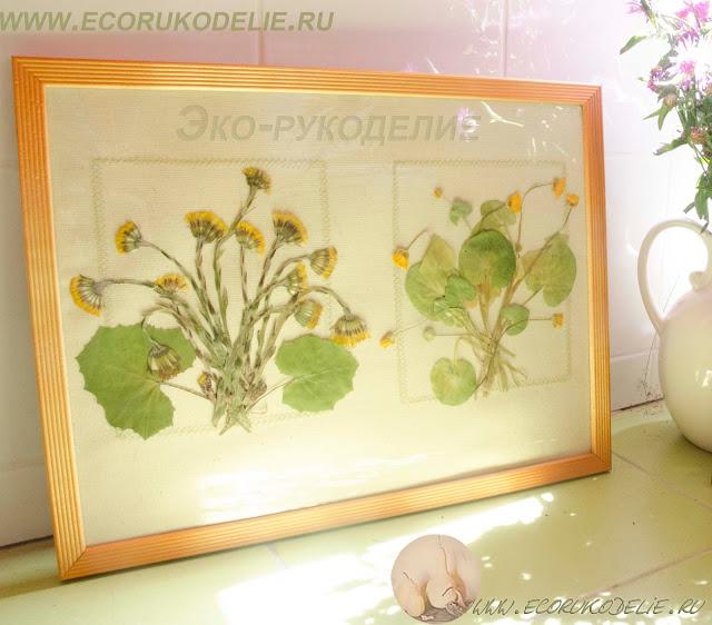 Как оформить гербарий