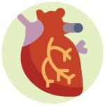 Benefici su tutto il tuo organismo, Apparato Cardiocircolatorio