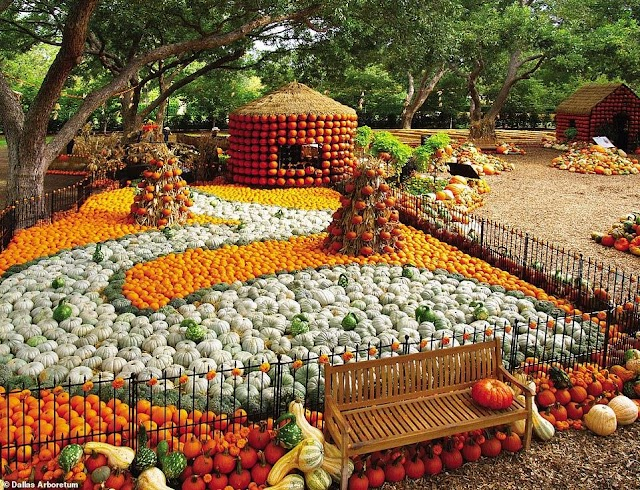 Unique village in America is made of 100,000 pumpkins