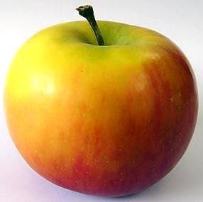 Imagen de la manzana con una pequeña rama
