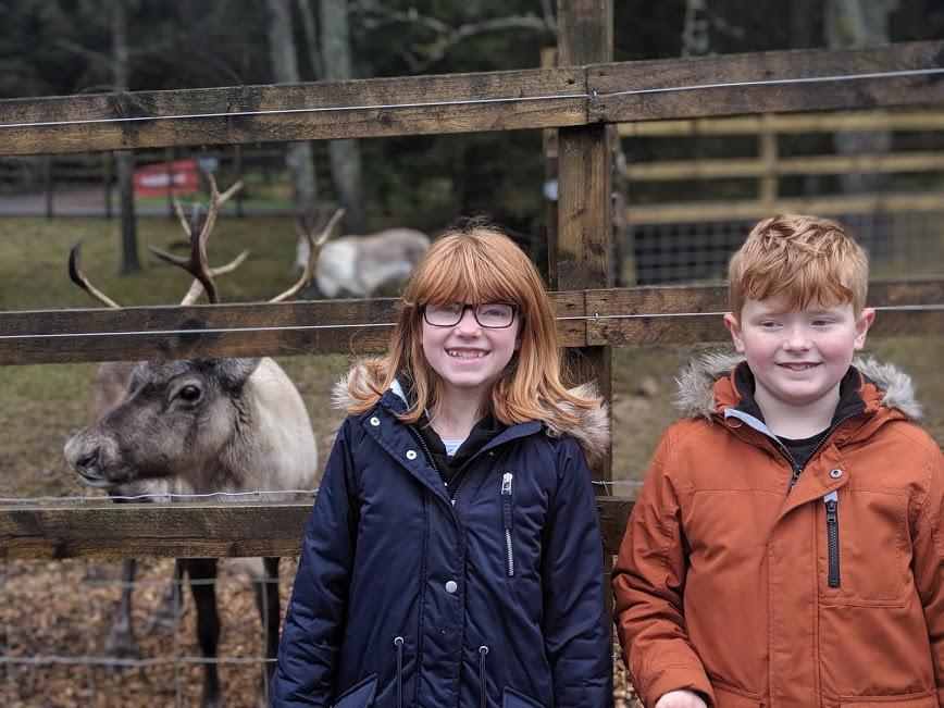 Reindeer at Kielder Winter Wonderland