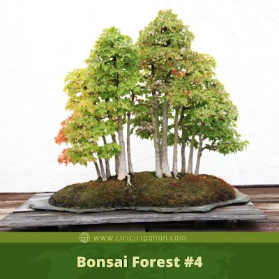 Bonsai Forest #4