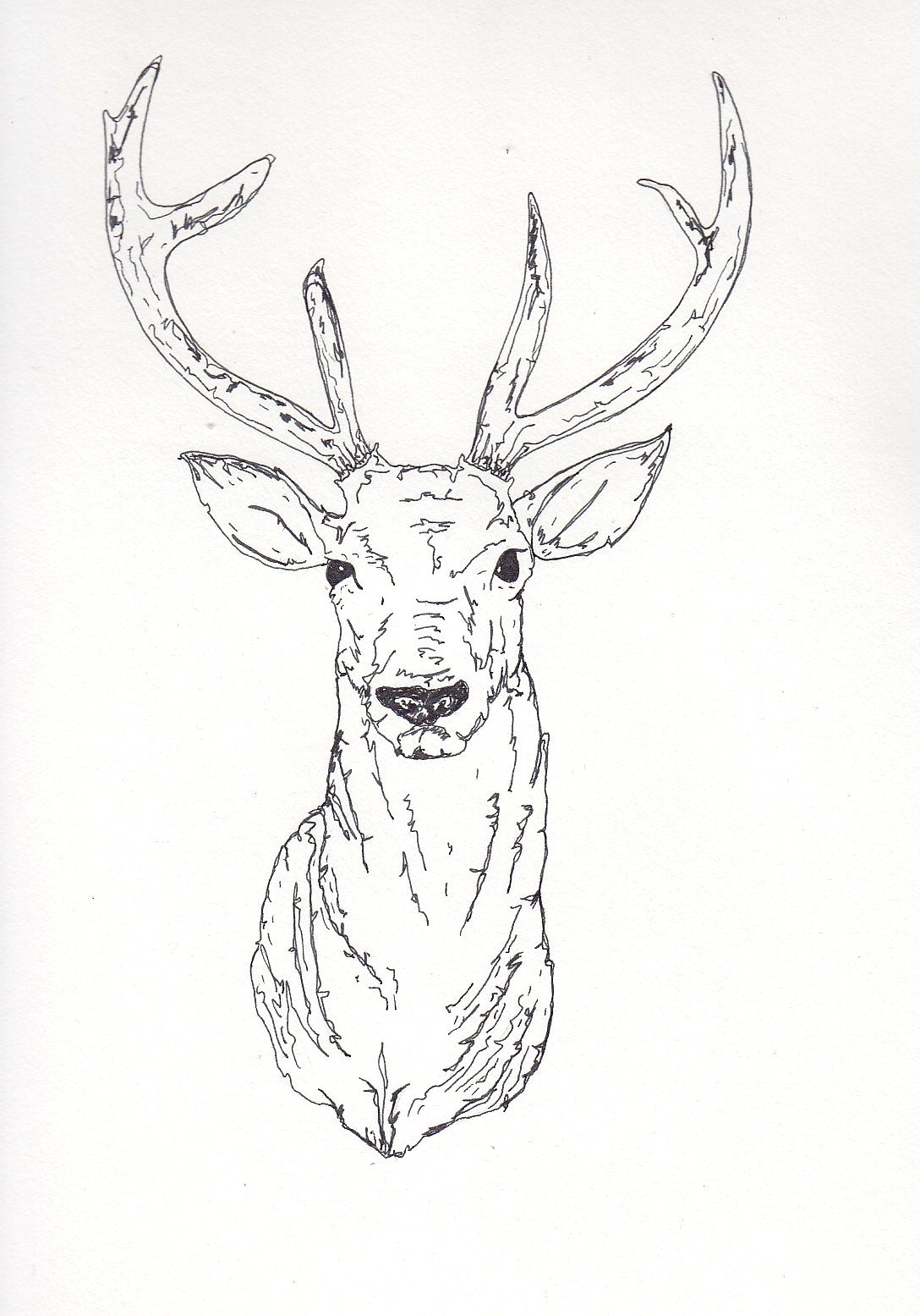 Yecats Wolliw: Stag