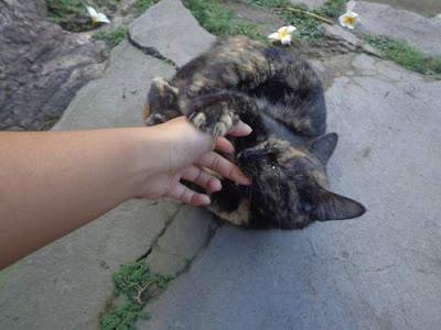 Yang Ditakuti dan Dibenci Kucing Anggora, Persia, Kampung, Lokal, Liar