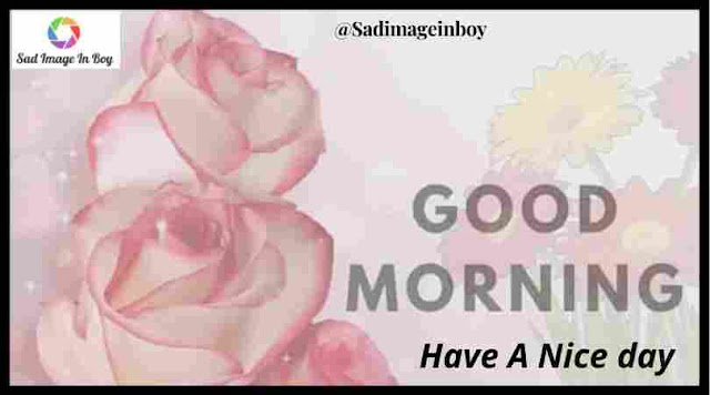 Good Morning Images | best of luck images, good morning images with rose flowers, good morning friends images
