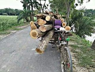 নাটোরে ঝড়ে ক্ষতিগ্রস্থ সরকারি গাছ স ' মিলে