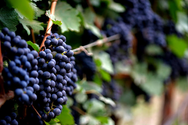 Blog Apaixonados por Viagens - Vinhos da Miolo - Mais uma Safra Lendária