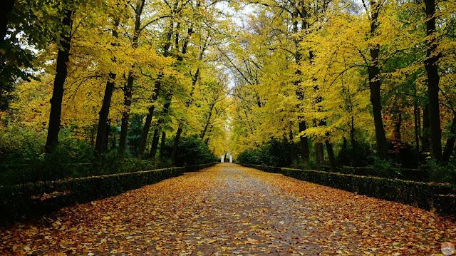 parque cubierto de hojas, arboleda a ambos lados
