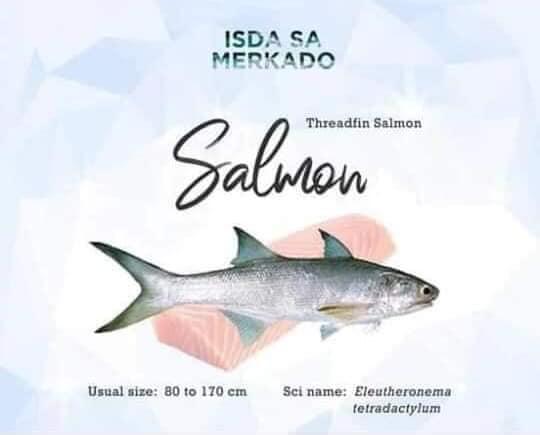 Isda Salmon (Threadfin Salmon) Eleutheronema tetradactylum - English: Fourfinger threadfin