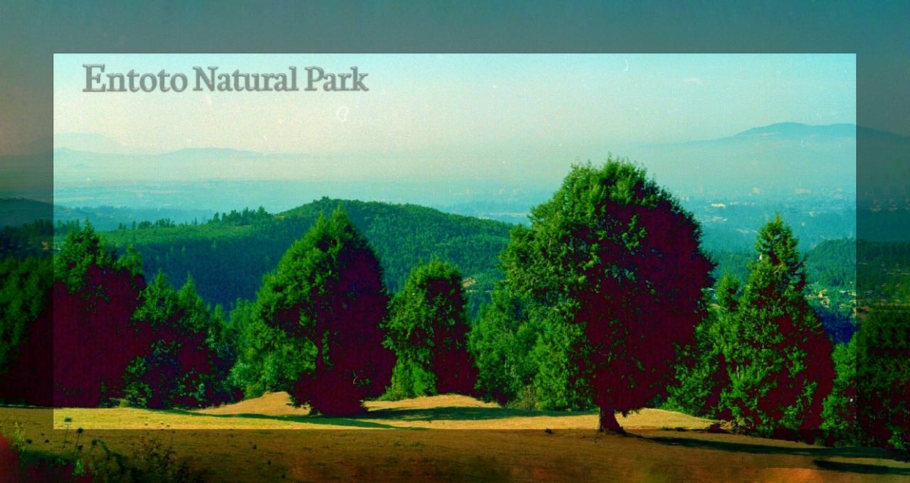 Entoto Natural Park