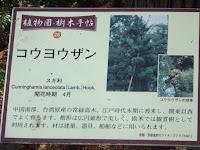 China fir information - Kyoto Botanical Gardens, Japan