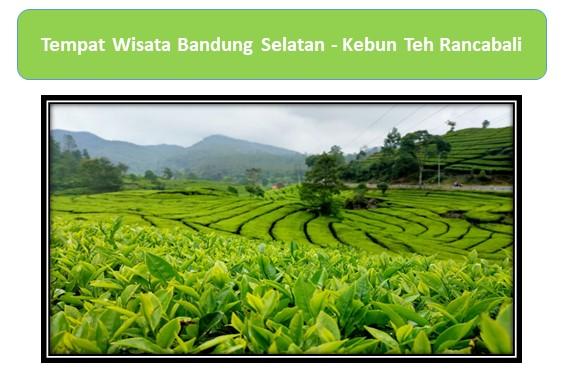 Tempat Wisata Bandung Selatan Kebun Teh Rancabali
