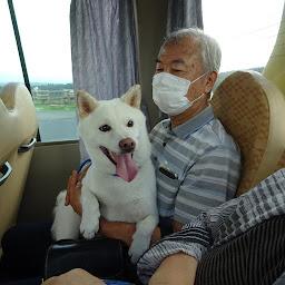 バスに乗ってごきげんの白柴チロ