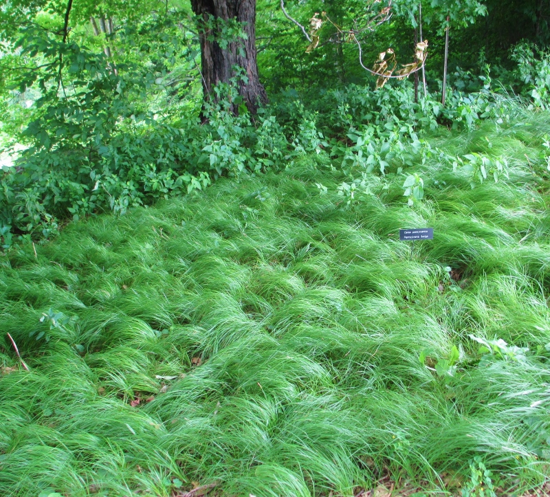 Become A Smarter Gardener In 2019 Grasses For The Shade