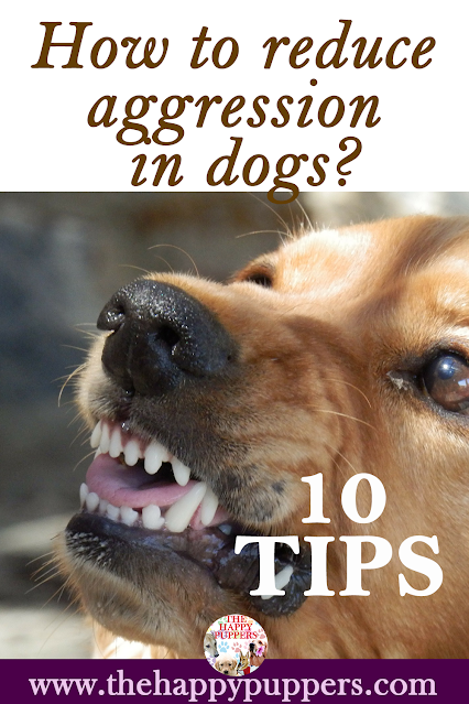 How to reduce aggression in dogs