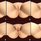BBWVR2 Genitals Reference