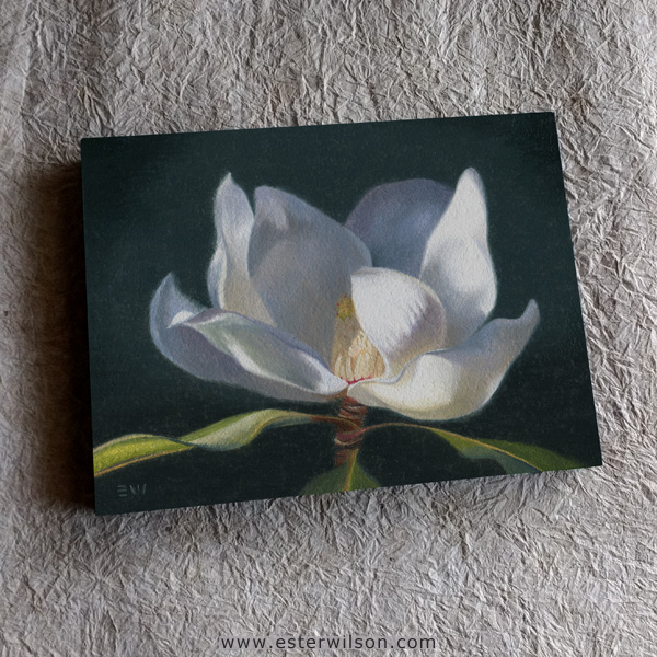 """Some soft light peeking through: """"Magnolia"""", Oil painting on panel, 8"""" x 6"""" Available in the shop!"""