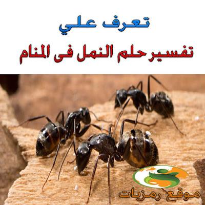 تفسير حلم رؤية النمل فى المنام