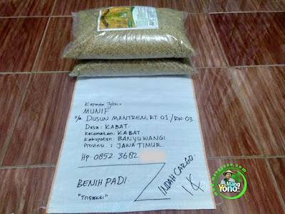 Benih Padi TRISAKTI Pesanan MUNIF Banyuwangi, Jawa Timur  (Sebelum di Packing)